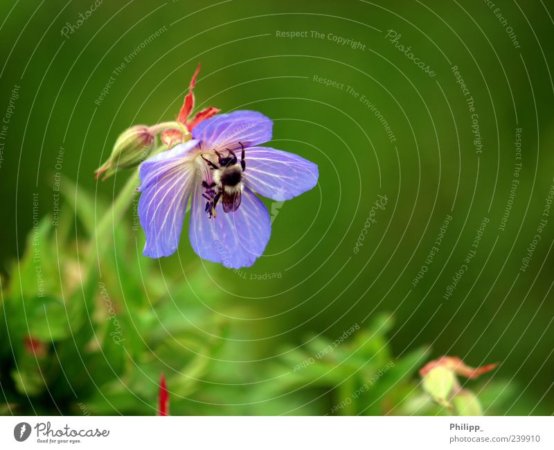 Nature Blue Green Plant Flower Animal Spring Blossom Work and employment Flying Wild animal Insect Diligent Bumble bee Seasons Sprinkle