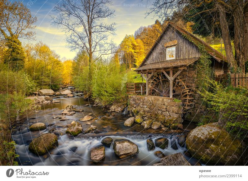 Black Forest Mill Environment Nature Landscape Plant Animal Water Sky Clouds Sun Spring Summer Weather Beautiful weather Tree Bushes Moss Meadow Rock River bank
