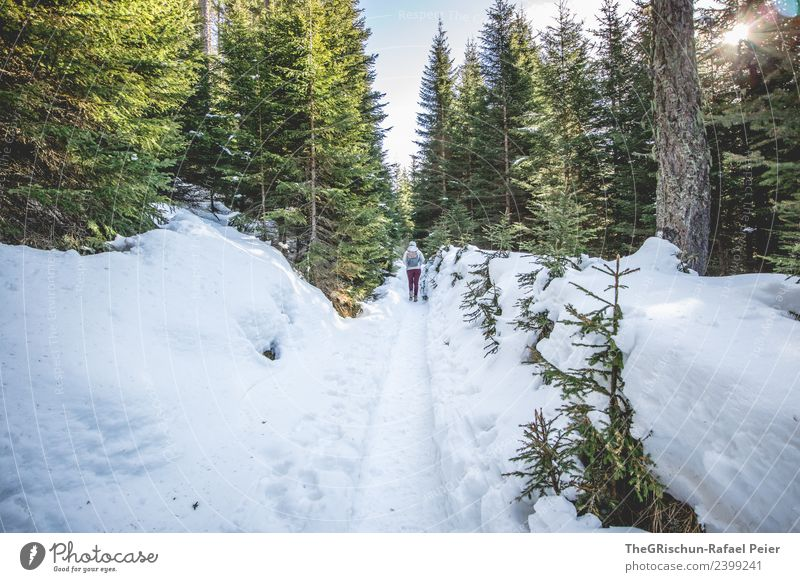 winter hike Environment Nature Landscape Blue Brown Gray Green White Forest Tree Sun Sunbeam Snow Woman Walking Lanes & trails To go for a walk Fir tree Tracks