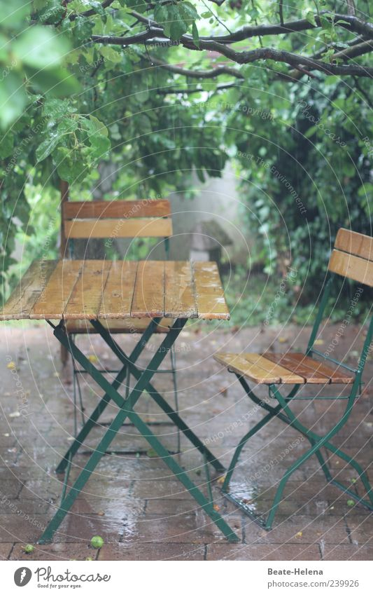 Nature Green Summer Cold Garden Brown Rain Wet Living or residing Break Freeze Bad weather Weather protection Wooden table Outdoor furniture