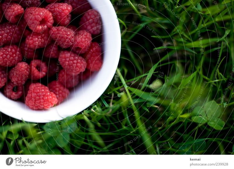freshly picked Food Fruit Raspberry Nutrition Picnic Vegetarian diet Finger food Bowl Nature Plant Summer Grass Foliage plant Garden Meadow Fresh Healthy