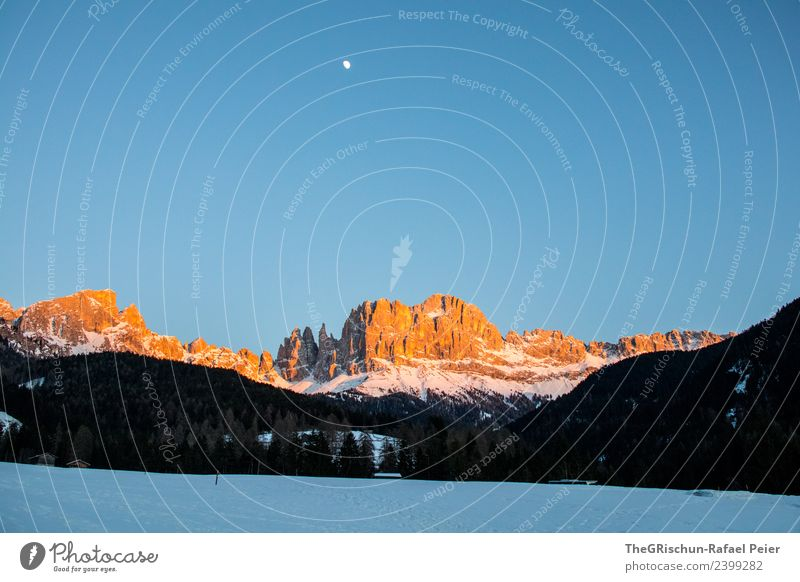 Dolomites Environment Nature Landscape Blue Brown Yellow Gold Black White Mountain Moon Vantage point Forest Snow Sunset Sky Moody Light South Tyrol