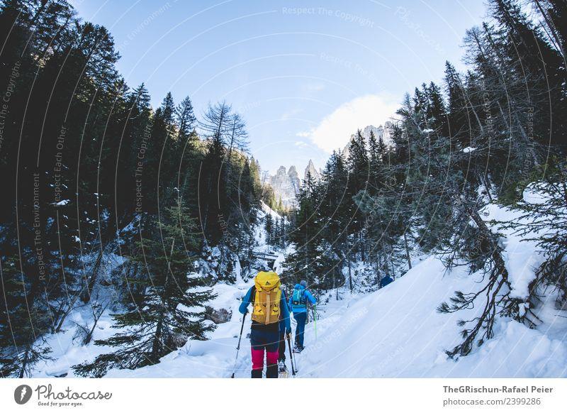 snowshoeing Environment Nature Landscape Blue Yellow Red Black White Mountain Forest Snow Tree Walking Snow shoes Hiking Winter Dolomites Vacation & Travel