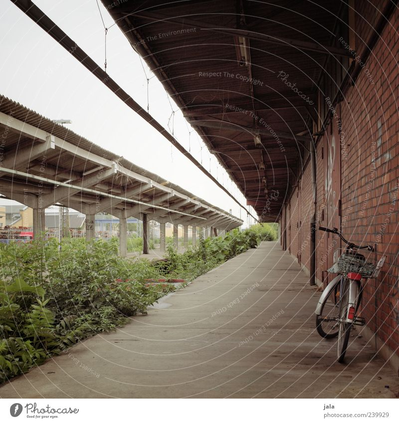 Sky Plant Wall (building) Architecture Wall (barrier) Building Bicycle Facade Bushes Gloomy Manmade structures Brick Parking Train station Foliage plant