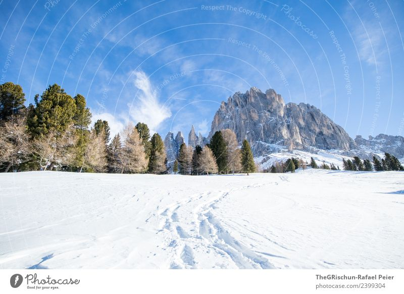 Dolomites Environment Nature Landscape Blue Brown Gray Green Black White Mountain Hiking Lanes & trails Tracks Snow Snow track Vantage point Go up Forest