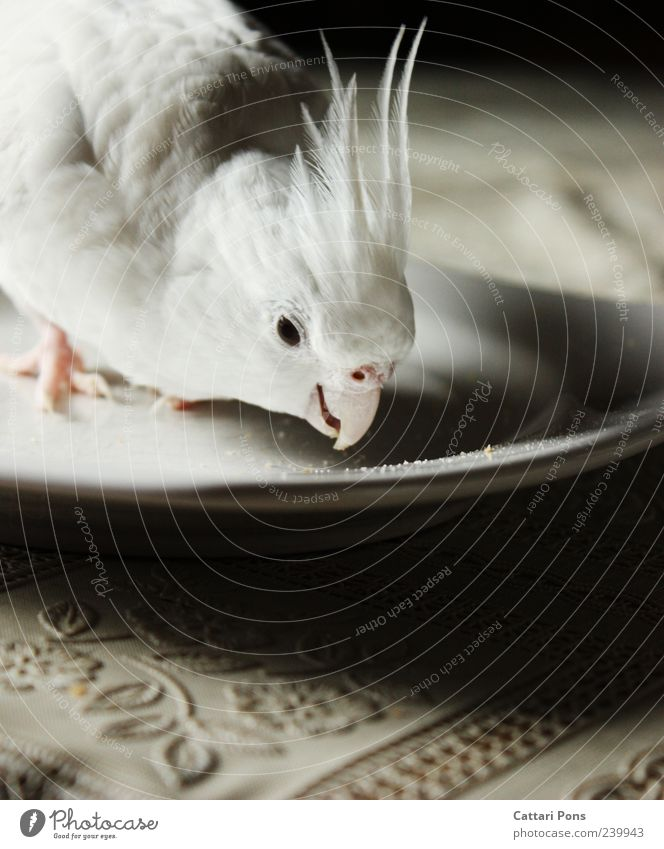 Beautiful White Animal Eyes Bright Head Bird Feather Cute Curiosity Thin Near Delicious Pet Plate To feed