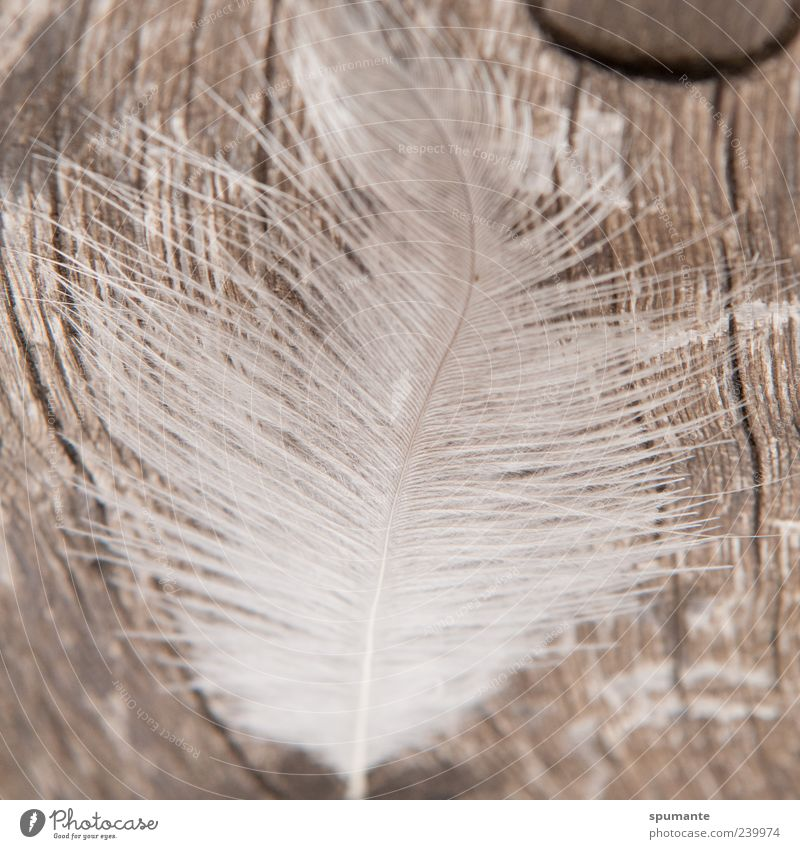 Nature White Animal Wood Gray Brown Lie Feather Silver
