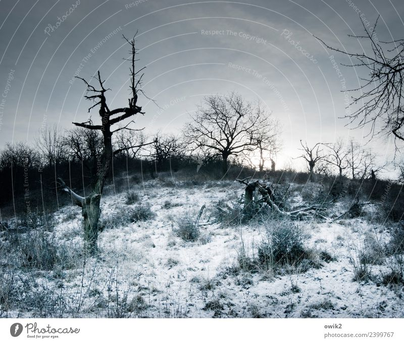 Inhospitable region Environment Nature Landscape Clouds Horizon Winter Beautiful weather Ice Frost Snow Plant Tree Bushes Branch Dark Cold Gloomy Bizarre