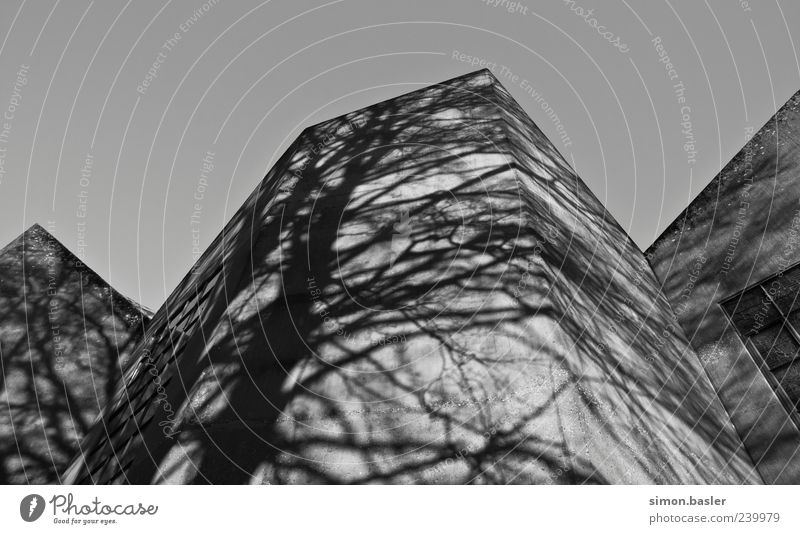 White Black Architecture Building Facade Exceptional Church Esthetic Branch Manmade structures Dome Sharp-edged Shadow play
