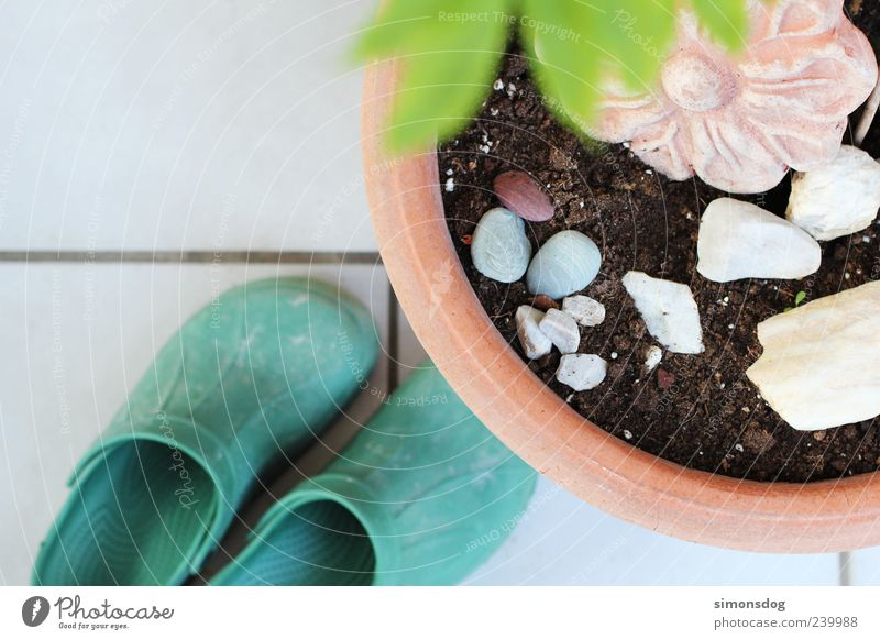 White Green Plant Flower Leaf Stone Earth Footwear Round Symbols and metaphors Tile Gardening Flowerpot Pot plant Terracotta Pair of shoes