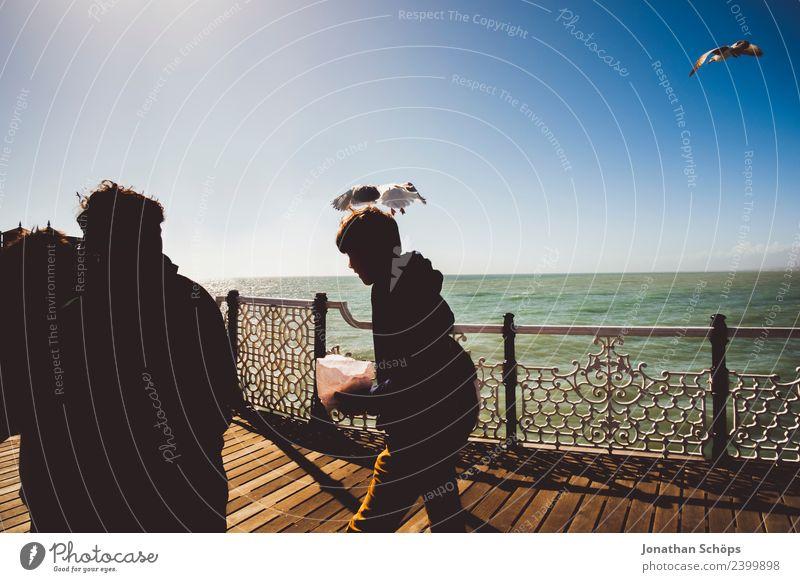 Gull attacks young man, pier, England Seagull Man teenager Young man Sea bridge Handrail wittily peril Dangerous birds animals Spontaneous Ocean sunny