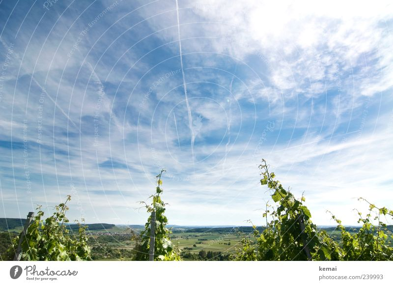 Sky Nature Blue Green Plant Summer Clouds Far-off places Environment Landscape Horizon Field Growth Vine Beautiful weather Vineyard