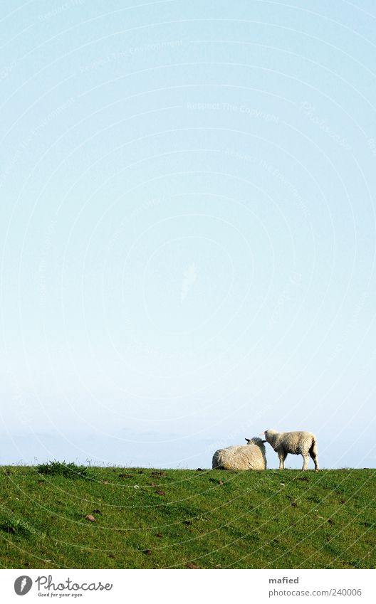 Sky Blue White Green Summer Ocean Animal Landscape Grass Coast Baby animal Contentment Lie Stand Beautiful weather Near
