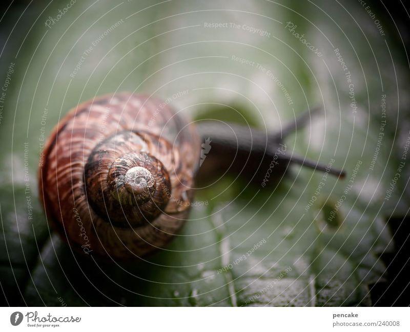 Nature Beautiful Green Leaf Animal Simple Elements Snail Snail shell Auburn