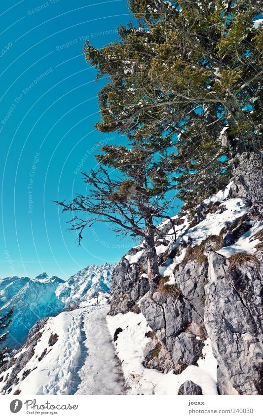 Want some ice cream? Nature Sky Cloudless sky Winter Beautiful weather Snow Tree Alps Mountain Berchtesgaden Alpes Lanes & trails Tall Cold Above Blue Gray