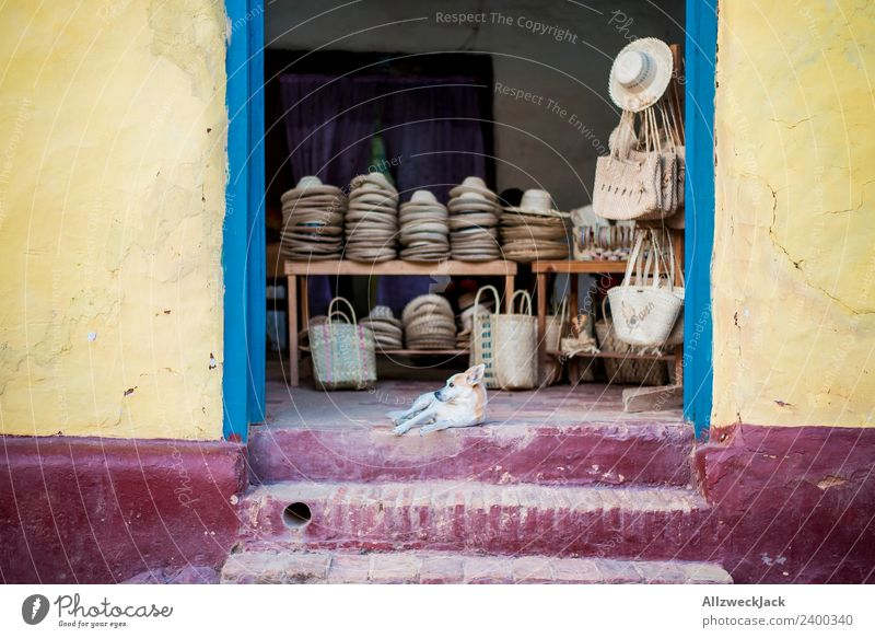 Dog lying on the floor guarding the store. Cuba Vacation & Travel Travel photography Town Deserted Hot Multicoloured Yellow Extinct Still Life Calm Siesta Hat