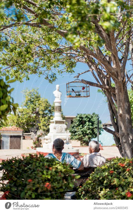Nature Vacation & Travel Summer Tree Relaxation Calm Travel photography Warmth Park Sit To enjoy Break Wanderlust Cuba Blue sky Siesta