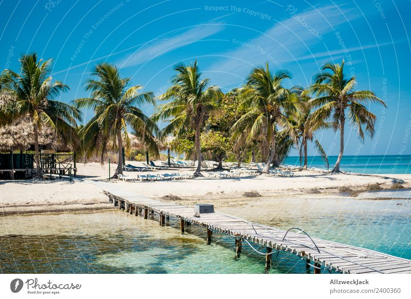 paradisiacal island with palm trees and jetty Day Deserted Island Paradise Footbridge Jetty Palm tree Beautiful Gorgeous Water Ocean Maritime Blue sky