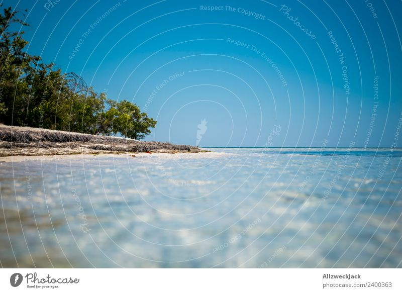 on the beach of a paradisiacal island in the Caribbean Day Deserted Island Paradise Beach Palm tree Beautiful Gorgeous Water Ocean Maritime Blue sky