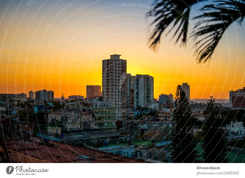 Havana Panorama Cuba Panorama (View) Sunset Summer Card Vacation & Travel Dusk Vantage point Skyline Deserted Palm tree Island Travel photography Far-off places