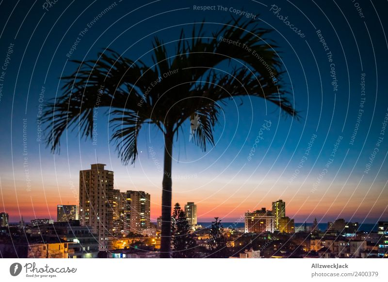 Skyline of Havana at night with palm tree Panorama (View) Deserted Summer Sun Vacation & Travel Island Far-off places Ocean Cloudless sky Town High-rise