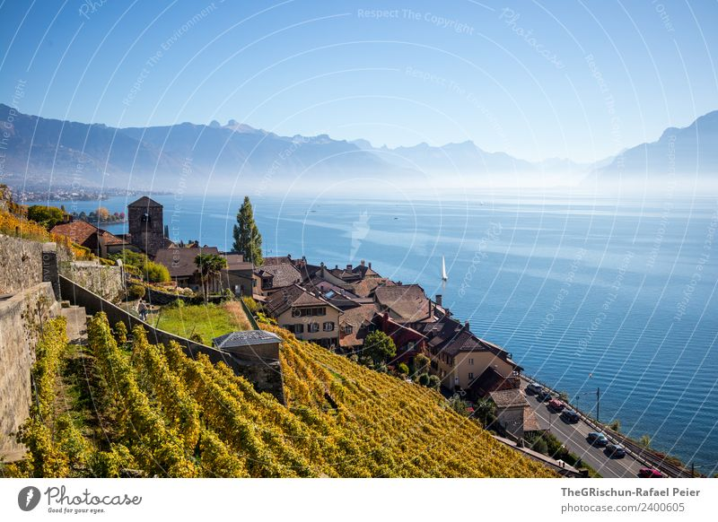 Village at the lake Environment Nature Blue Brown Yellow Gold Black White Lake Geneva House (Residential Structure) Wine growing Vine Bunch of grapes Water