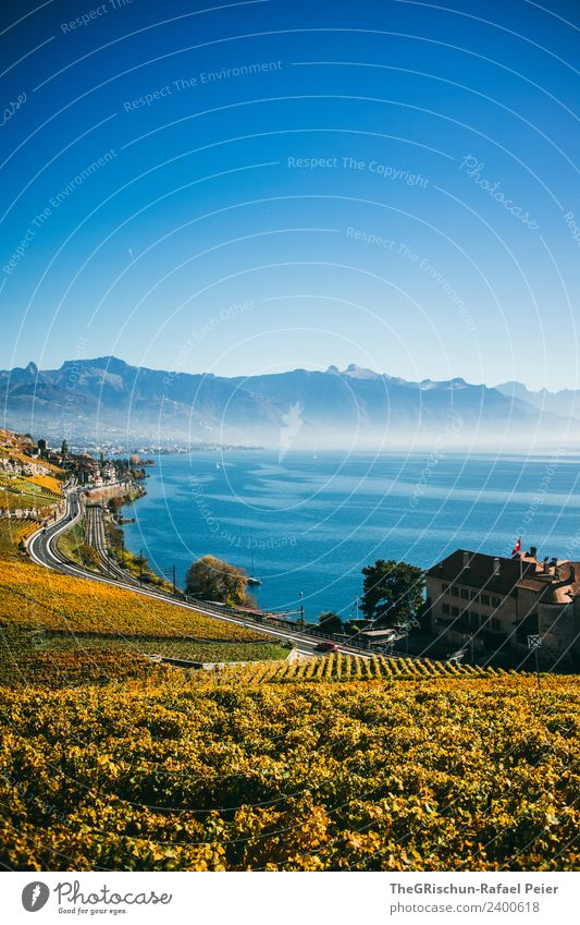 vine Nature Landscape Blue Brown Yellow Gold Black White House (Residential Structure) Bunch of grapes Water Wine Mountain Haze Plant Autumn Street Switzerland