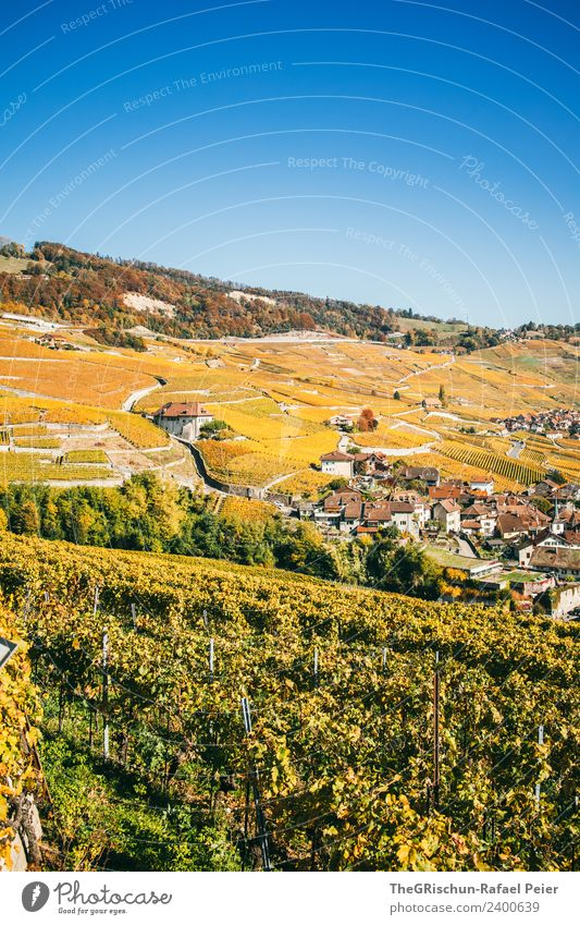 Sky Nature Blue Landscape Yellow Environment Autumn Hiking Gold Cute Vine Wine Switzerland Blue sky World heritage