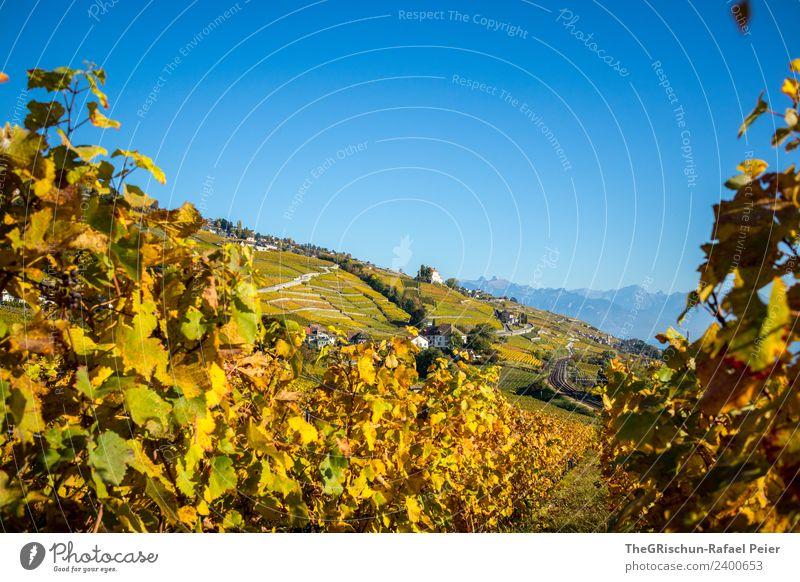 vineyard Nature Landscape Blue Brown Yellow Gold Green Orange Autumn Switzerland Vine Vineyard Bunch of grapes Wine House (Residential Structure) Sky