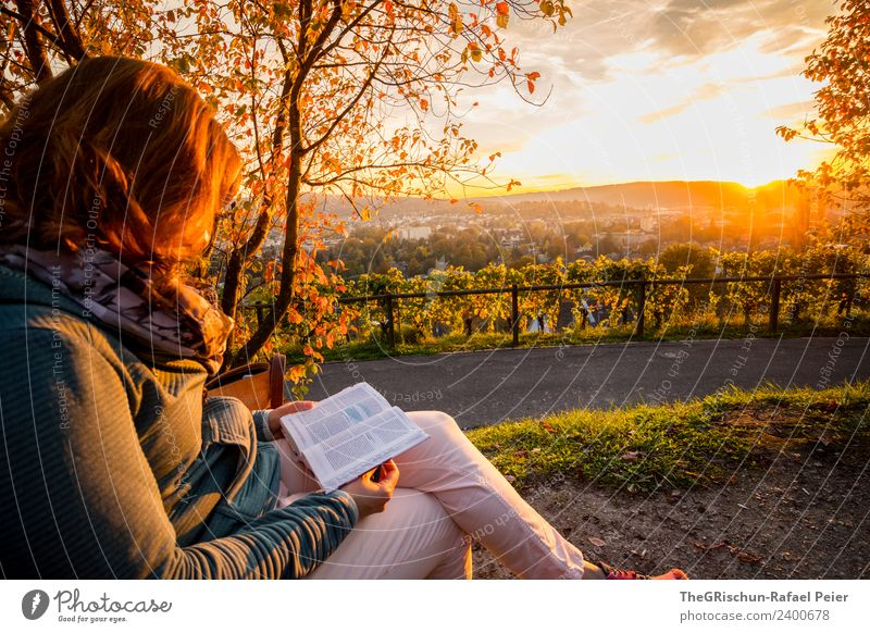 read Environment Nature Brown Multicoloured Yellow Gold Green Winterthur Vine Sunset Reading Comfortable Idyll Relaxation Colour photo Exterior shot