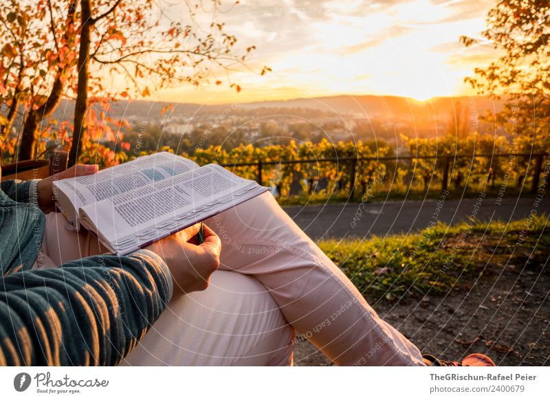 read Nature Multicoloured Yellow Gold Reading To enjoy Vantage point Winterthur Tree Back-light Moody Sunset Colour photo Exterior shot Copy Space top Evening