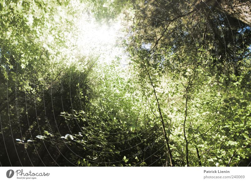 ray of hope Sun Environment Nature Plant Sunlight Summer Weather Beautiful weather Tree Forest Bright Natural Green Dazzle Flashy Colour photo Exterior shot