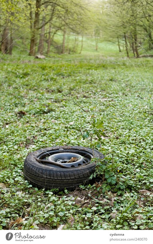 Nature Forest Environment Landscape Meadow Grass Time Dirty Esthetic Broken Transience Trash Destruction Forget Environmental pollution Car tire