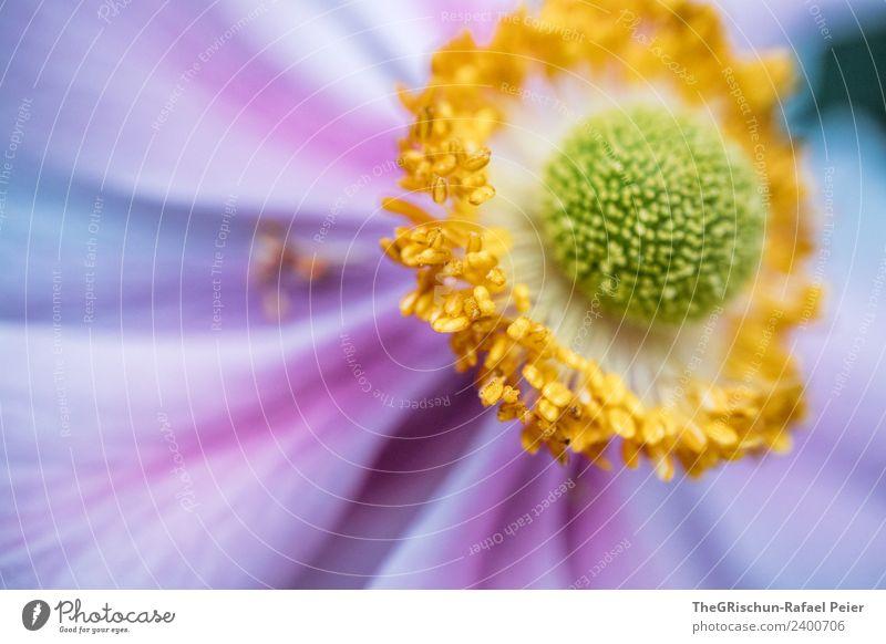 Plant Green Flower Yellow Blossom Esthetic Blossoming Round Violet Pollen Progress