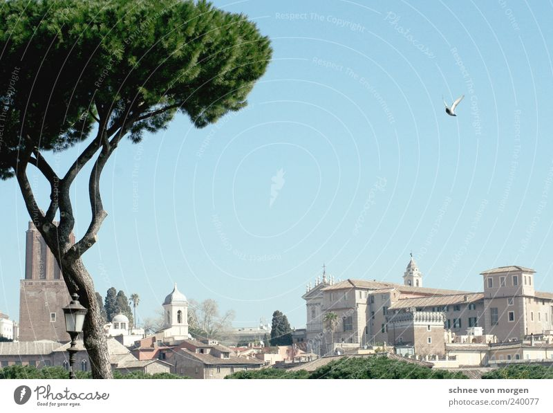 short flap Rome Italy Sky Blue Pigeon Tree Ancient Historic Green Building City trip Church Deserted Travel photography