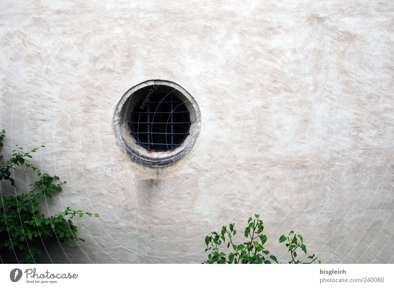 compound eye Bushes Wall (barrier) Wall (building) Window Grating Gray Green Closed Colour photo Exterior shot Deserted Copy Space right Hollow Exceptional