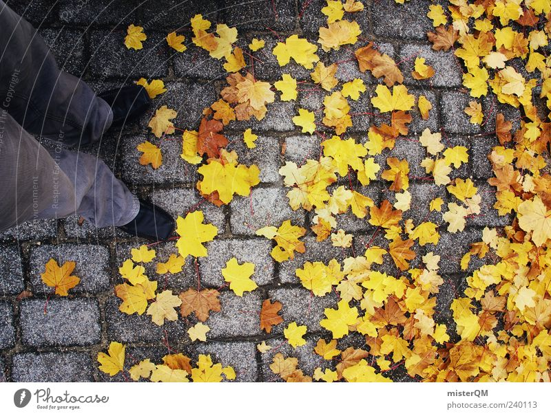 Yellow Autumn Legs Contentment Esthetic Autumn leaves Paving stone Autumnal Maple tree Autumnal colours Abstract Early fall Leaf Autumnal weather