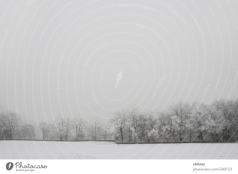 Tree Plant Winter Loneliness Environment Landscape Meadow Cold Snow Wall (building) Gray Wall (barrier) Sadness Park Ice Fog