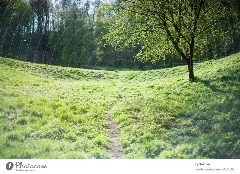 Nature Green Tree Loneliness Calm Relaxation Forest Far-off places Environment Landscape Meadow Life Grass Spring Lanes & trails Freedom