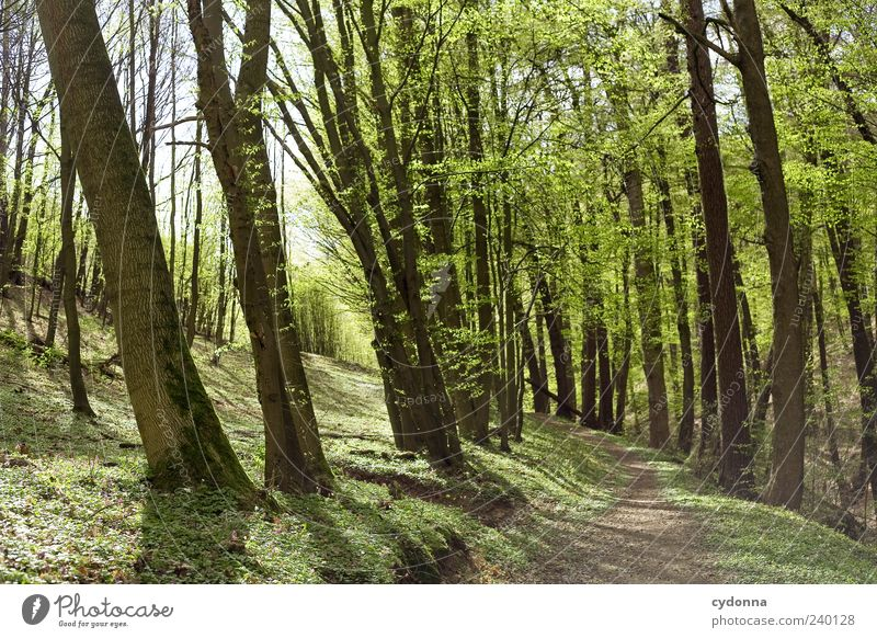 walk in the woods Lifestyle Harmonious Well-being Relaxation Calm Trip Far-off places Freedom Environment Nature Landscape Spring Tree Forest Loneliness