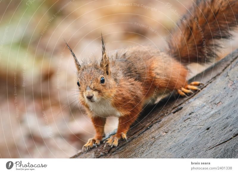 Red Squirrel Eating Science & Research Environment Nature Animal Tree Moss Park Forest Rock Fur coat Wild animal 1 Stone Stand Wet Cute Brown