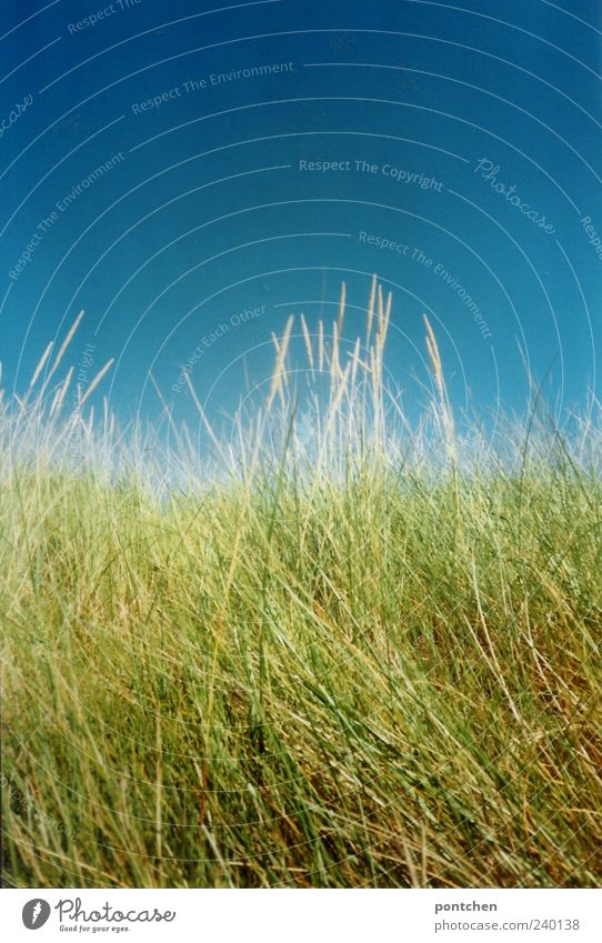 Sky Nature Blue Green Environment Grass Cloudless sky Foliage plant