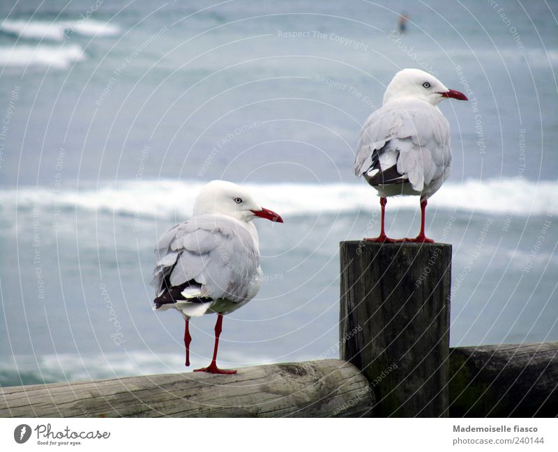 2 seagulls with only 3 legs sitting on wooden fence at the sea Nature coast Animal Bird Looking Stand Together Cute Blue Brown Gray White Contentment Friendship