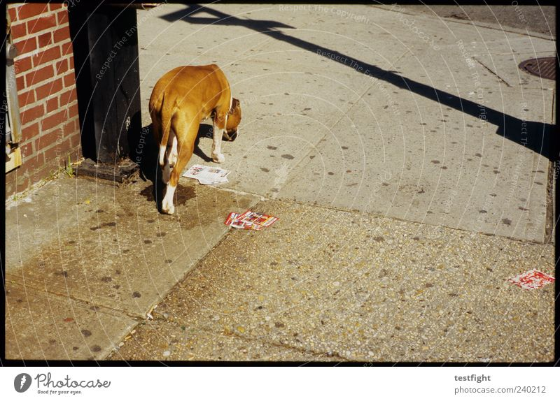 take me to broadway Animal Dog 1 Authentic Shadow Odor Sidewalk In transit Walking Colour photo Exterior shot Deserted Day Sunlight Street dog Going