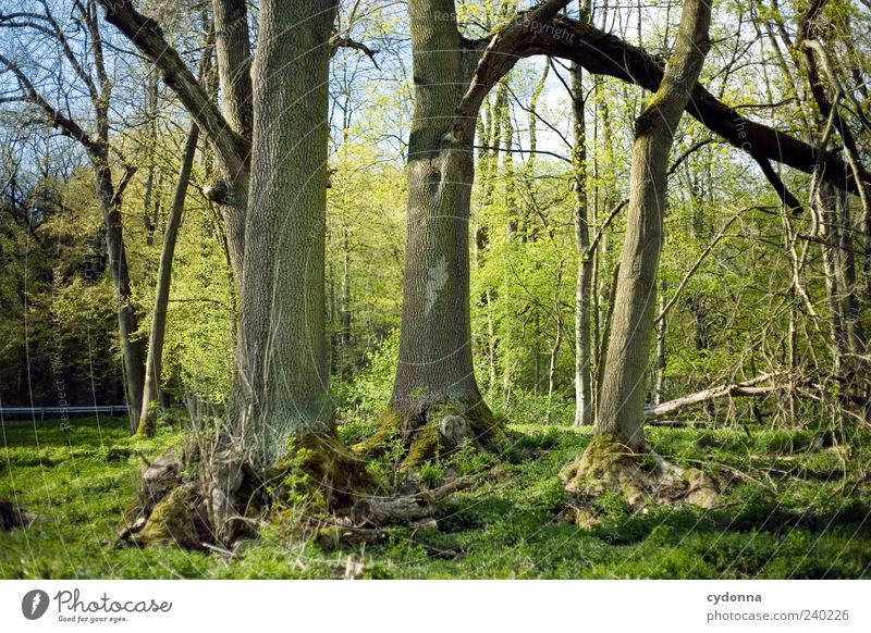 Nature Tree Calm Relaxation Forest Environment Landscape Spring 3 Trip Growth Uniqueness Tree trunk Harmonious Perspective Edge of the forest