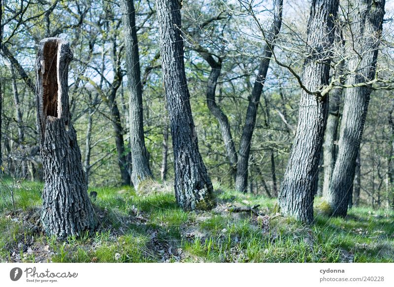 Nature Tree Calm Forest Environment Landscape Grass Freedom Exceptional Trip Growth Esthetic Uniqueness Tree trunk Hollow Vacation & Travel