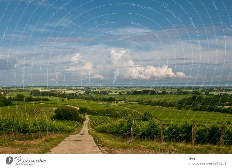 Sky Nature Tree Plant Summer Clouds Landscape Meadow Grass Lanes & trails Horizon Vine Beautiful weather Hill Vineyard