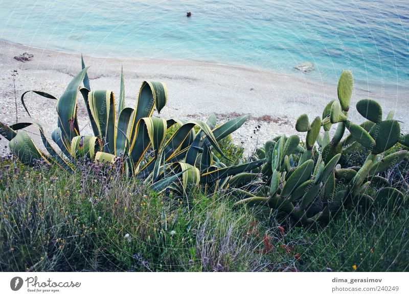 Seaside Flower Plant Beach Leaf Relaxation Weather Climate Cactus