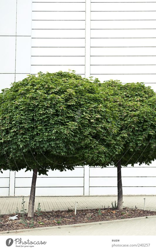 Nature Green Tree Environment Wall (building) Wall (barrier) Facade Growth Gloomy Round Simple Treetop