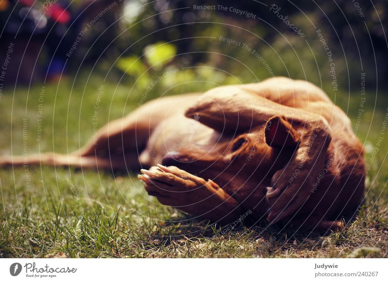 I can't hear you! Summer Environment Nature Meadow Animal Pet Dog Paw Relaxation Cute Moody Contentment Serene Boredom Colour photo Exterior shot Deserted